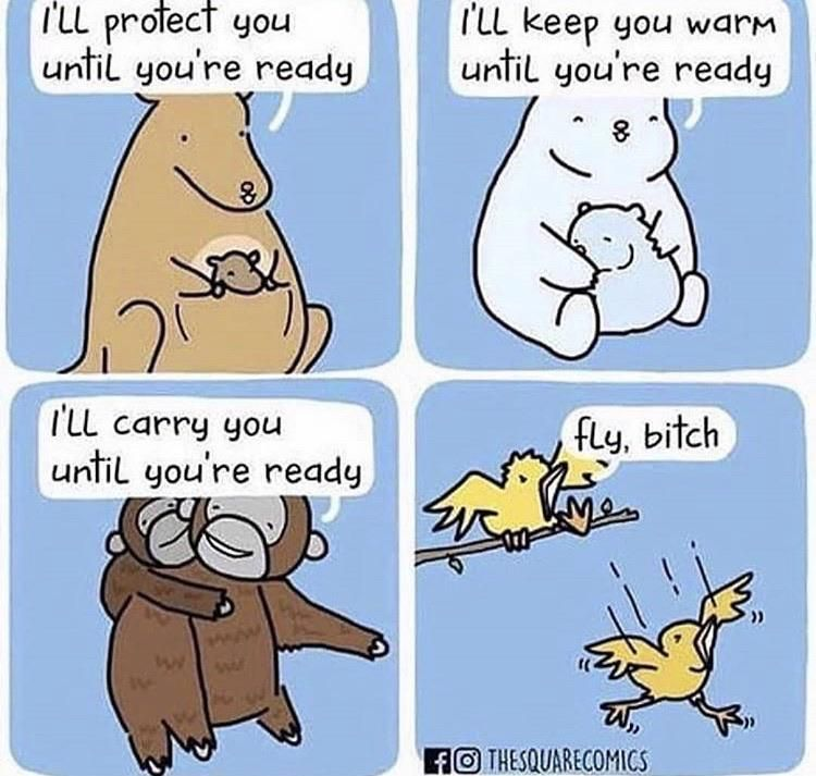 Why are birds so brutal?