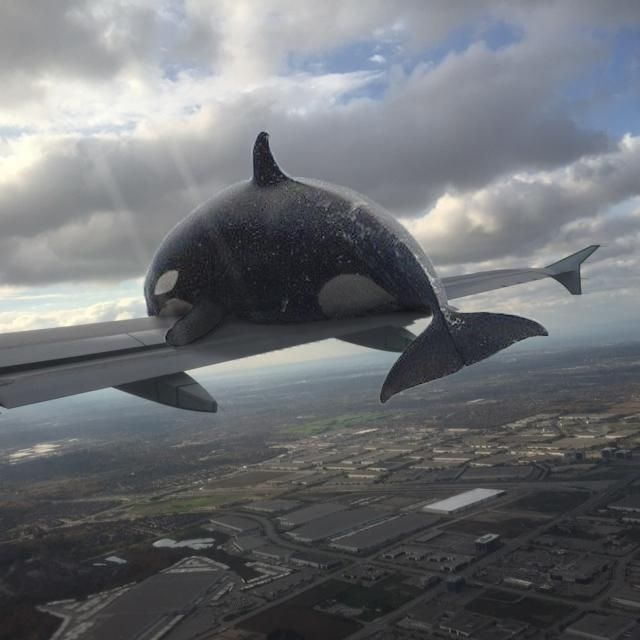 I photoshopped an Orca whale getting hit by a plane