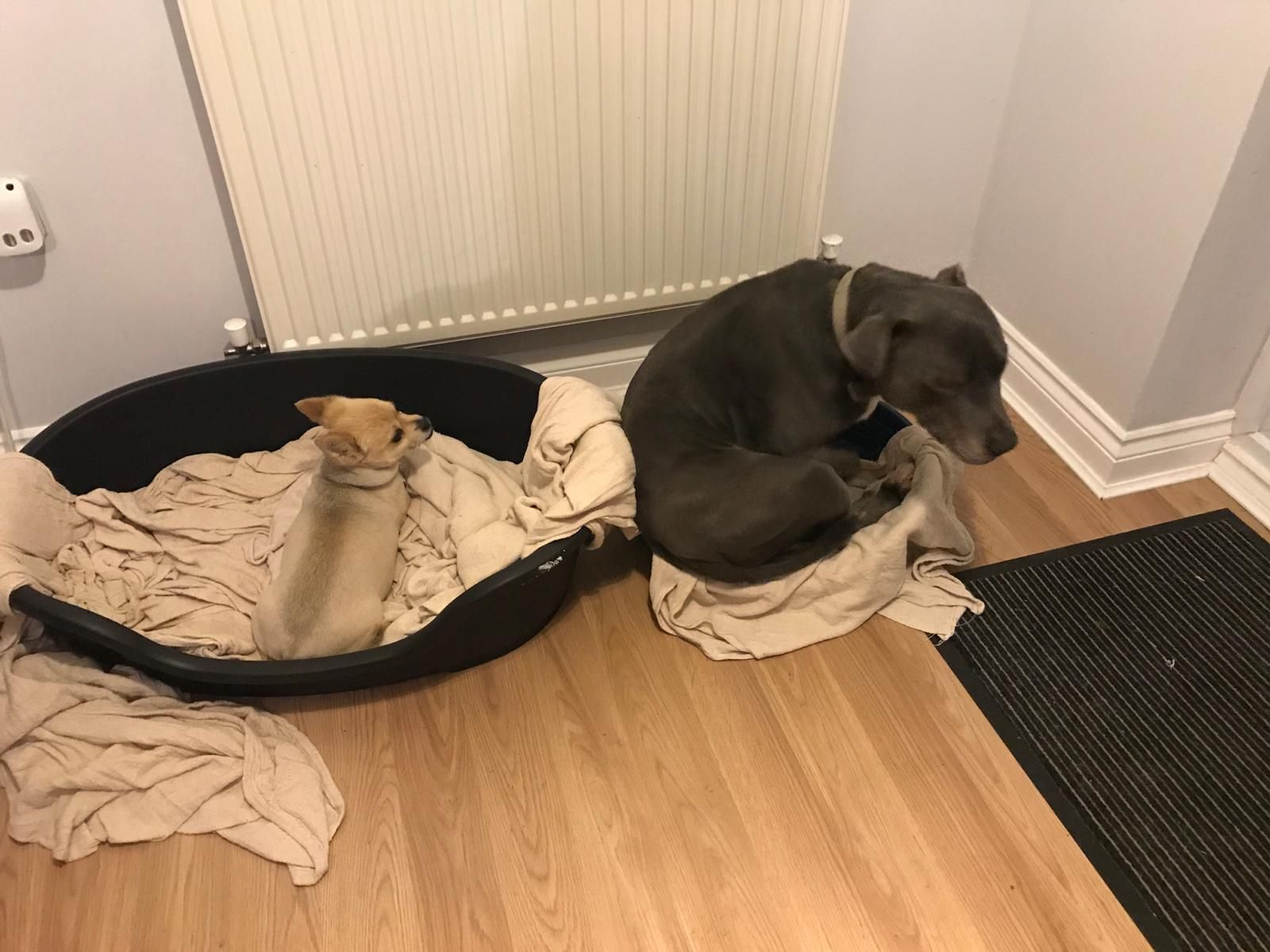 I bought my dogs some new beds.