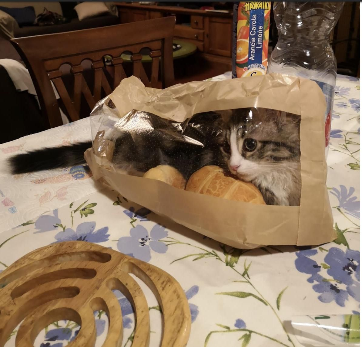 Bought two bread loaves and a cat loaf