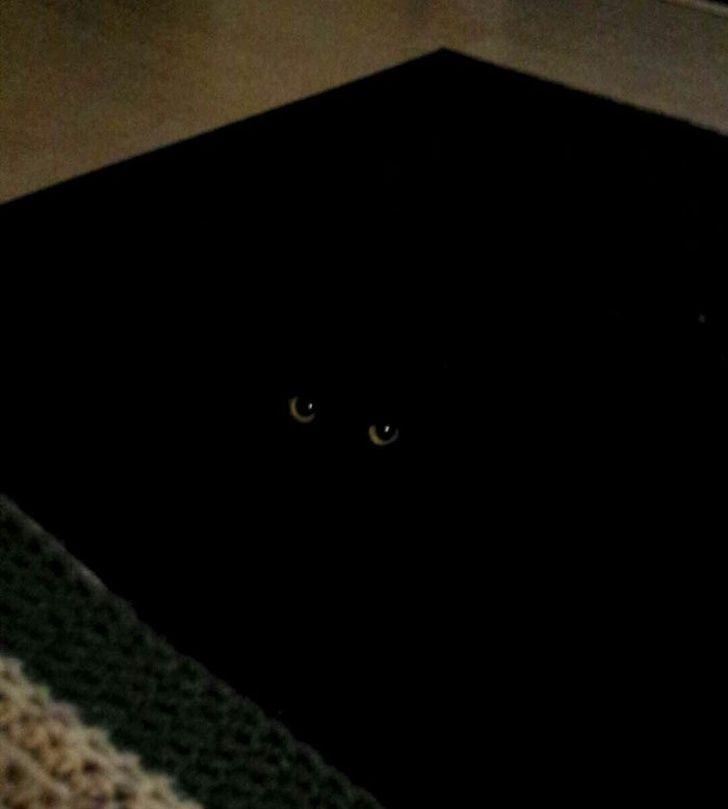 Apparently, my rug has eyes...