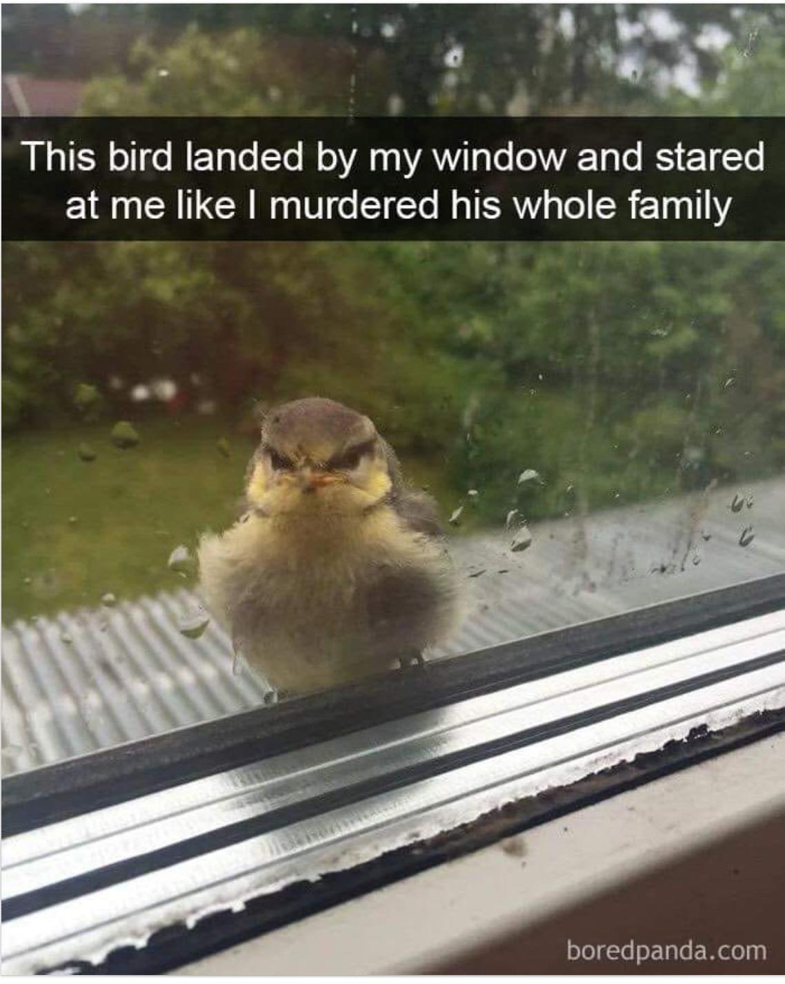 Nice birdy