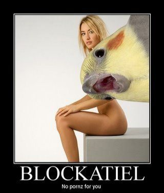 "From Today's Meme Archives: ""Blockatiel"" (est. 2007). Anti-coom birb in comments."
