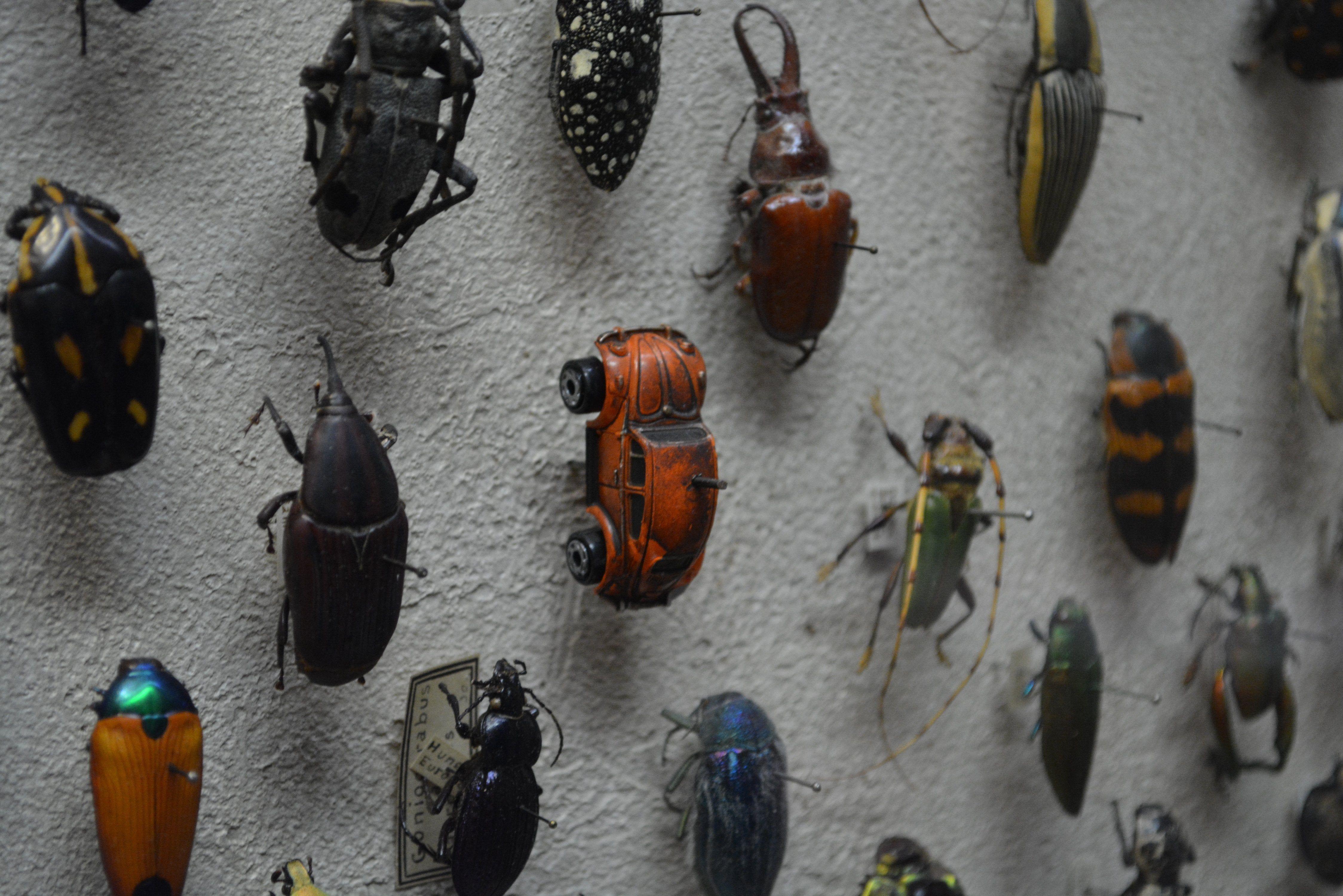 Well... it is a beetle.