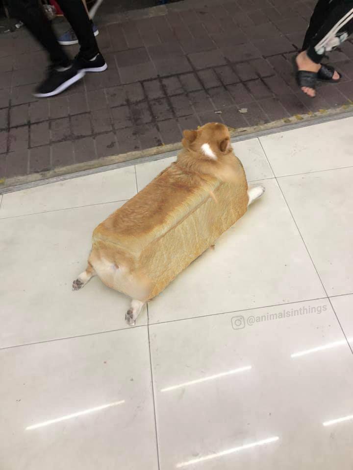 Here is an inbread dog.