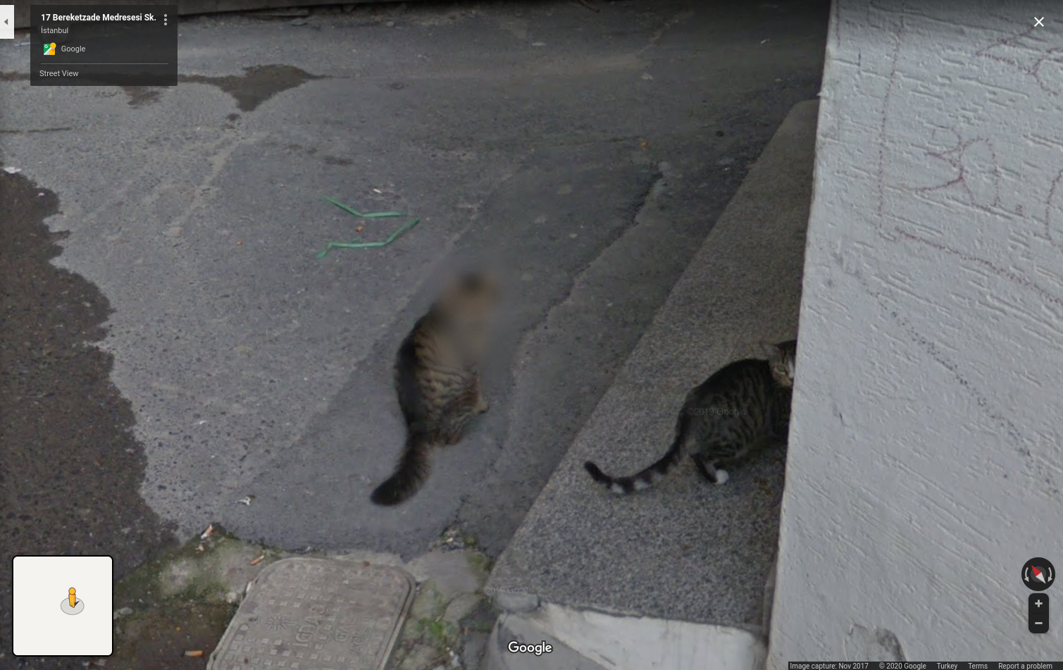 Google's algorithm blurred this cat's face...