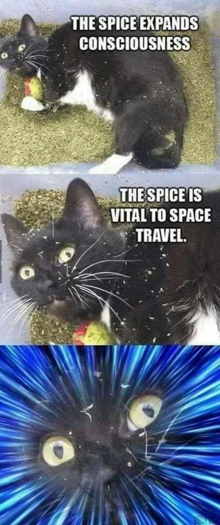 Ya'll got anymore of that cat nip?
