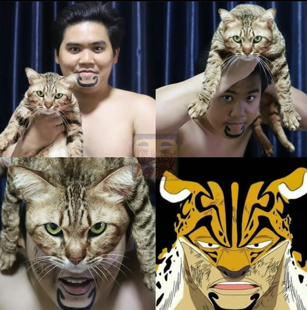 Low cost cosplay with another cat.