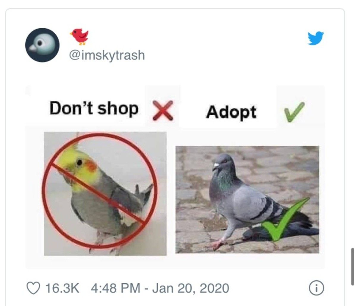 (HL doesn't support the bird emoji so my title is ruined)