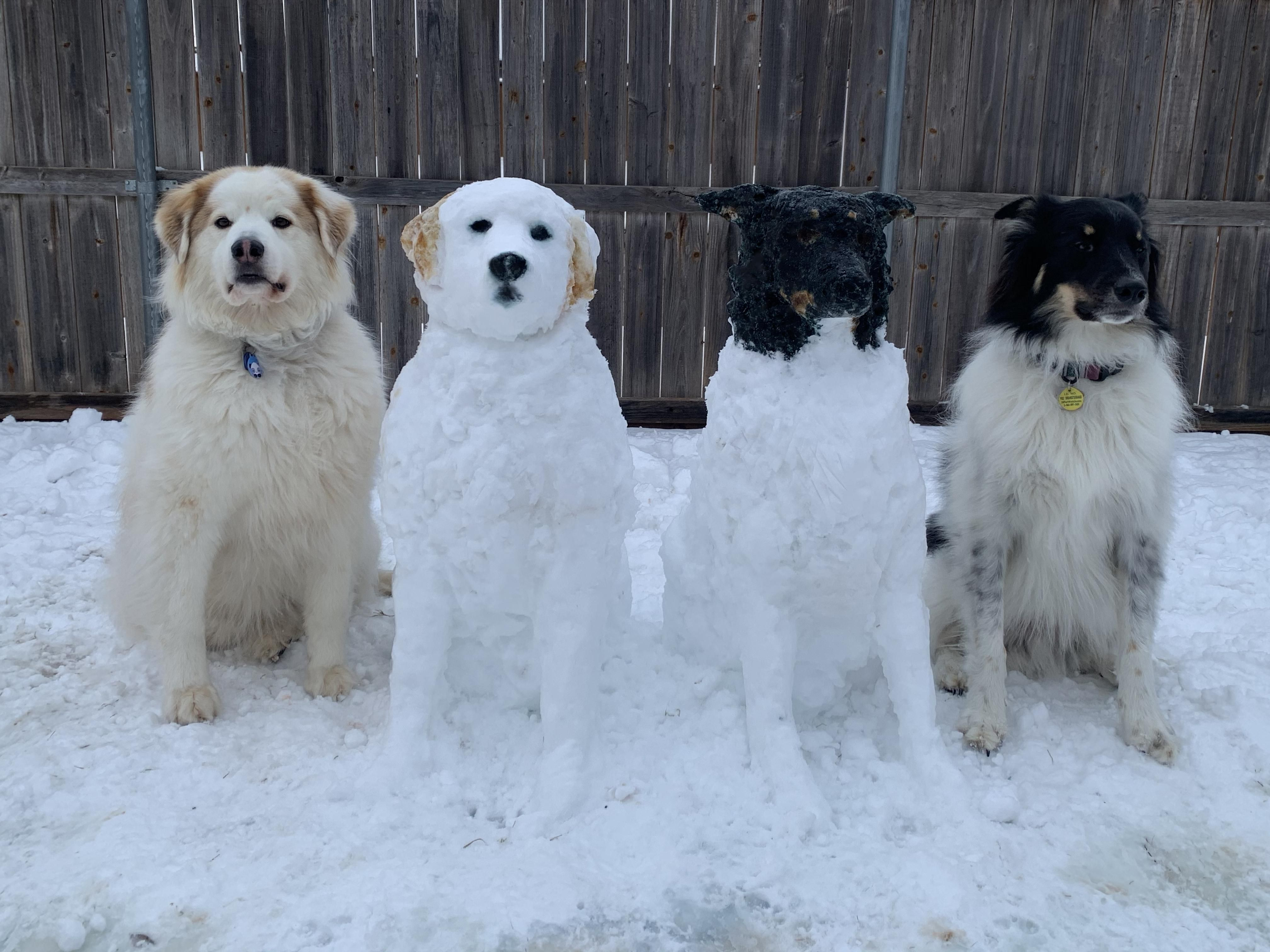Look again. There are only two dogs in this photo.