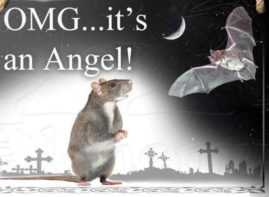 Bats are just angel rats.