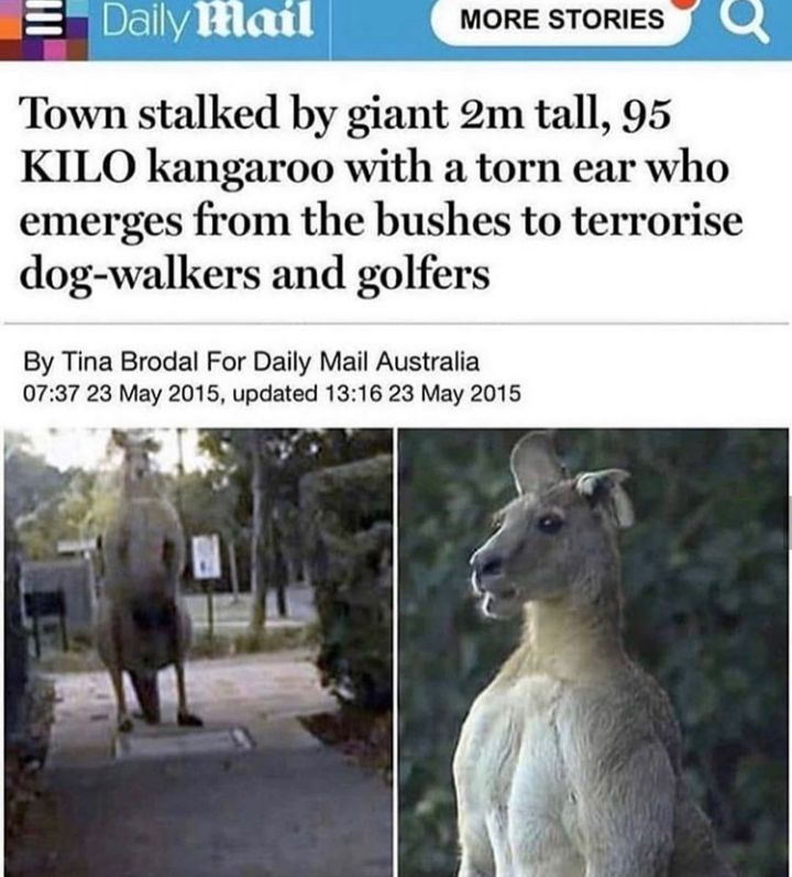Roses are red, leave problems to problem solvers,