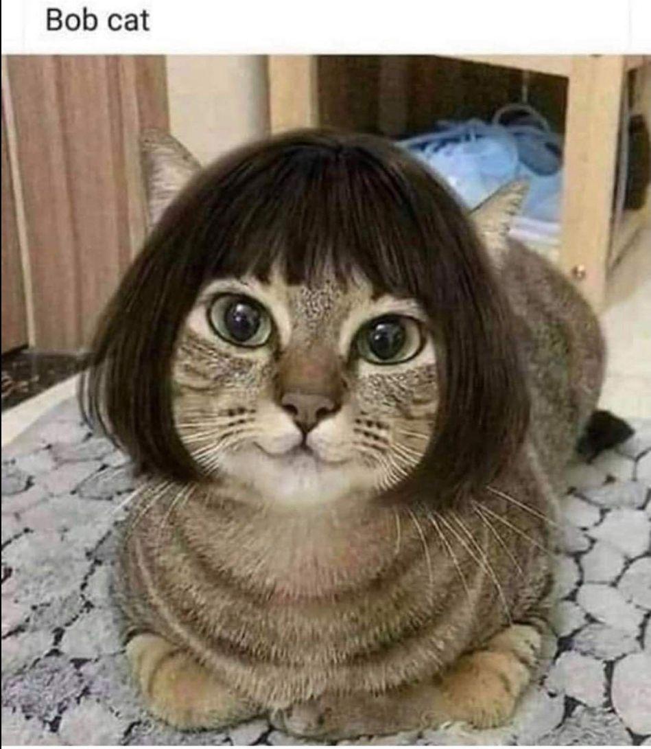 Who has a Bob Cat