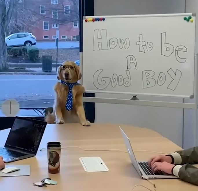 How to be a good boy