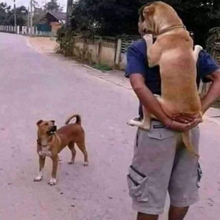 """They said, """"get a dog, he will protect you.."""" meanwhile. My DOG?"""