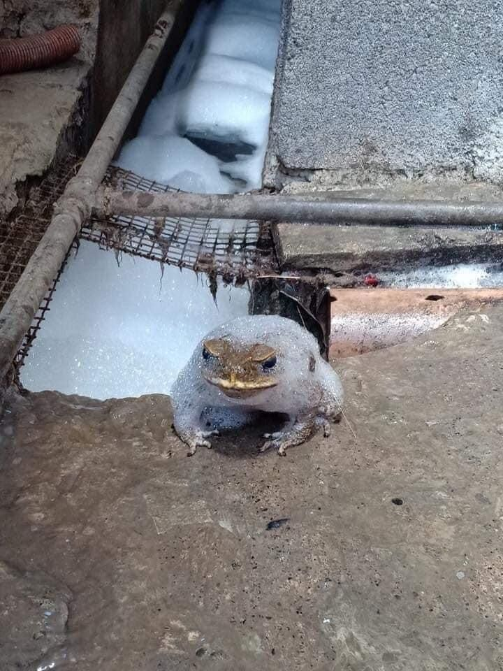 Who the f*ck decided to clean the sewers without telling me