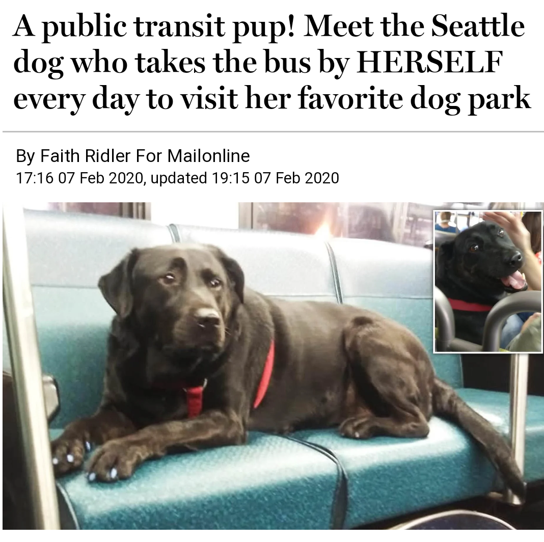 Happy Dog Smile...