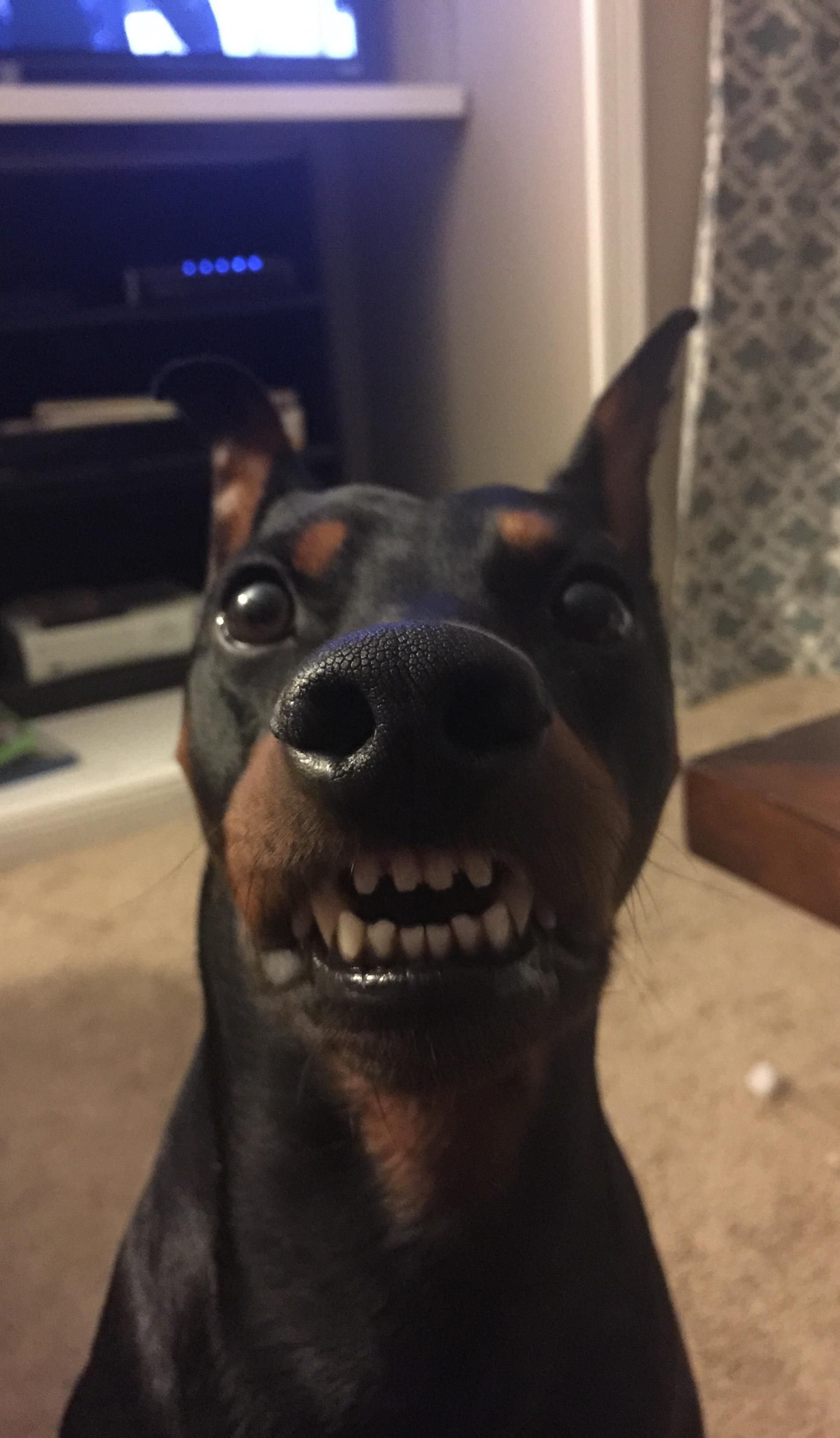 My sister sent me this picture of her dog with zero context.