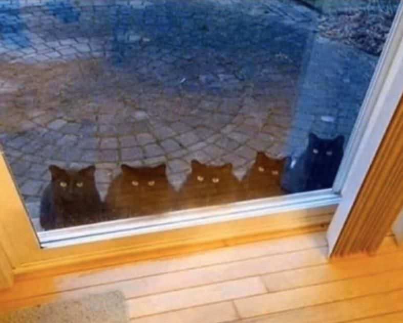 Hello, we know you are single and over 40. Let us in!