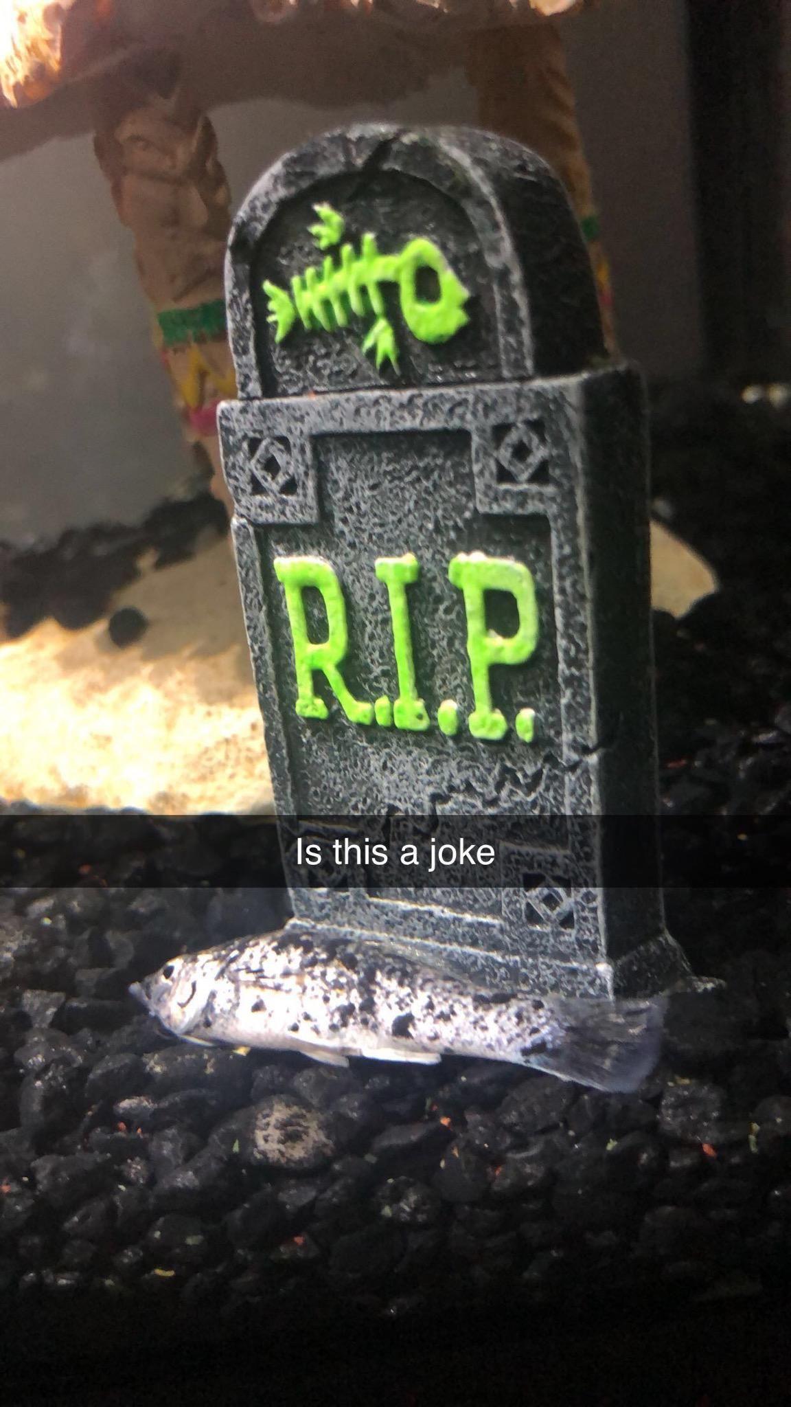 Friend's Fish Died In The Appropriate Spot
