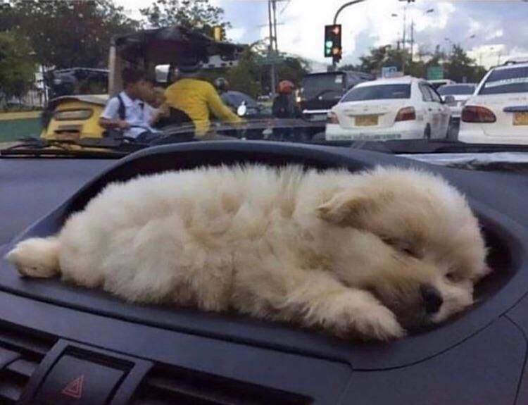 Bought a new car. It came with a puppy holder!