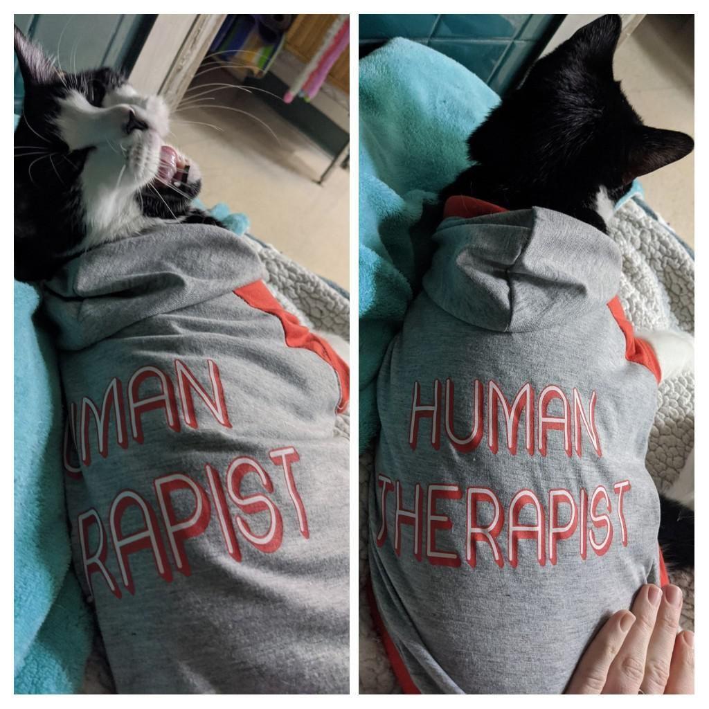This cat hoodie