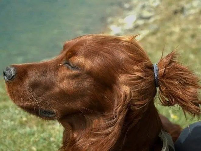 This dog looks like he's vegan