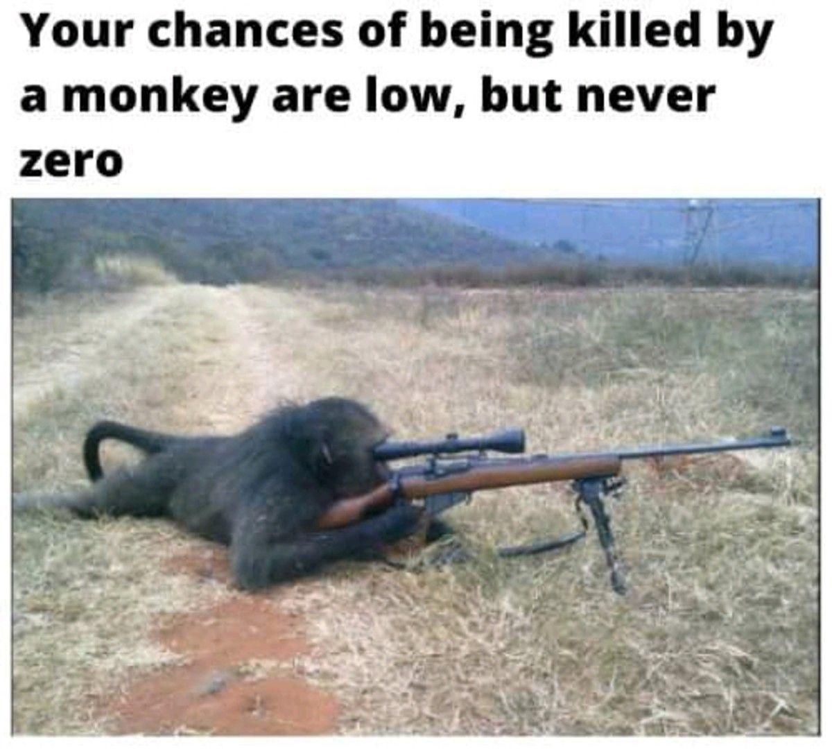 Random chimp event