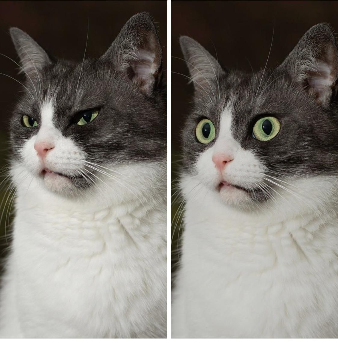 When my cat starts off skeptical but then discovers the awful truth.