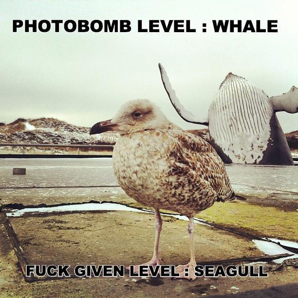 Photowhale