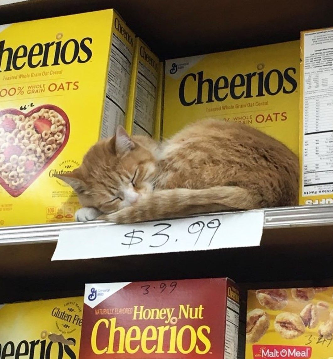 I think it's a new flavor. Cheerios cat meal I think..