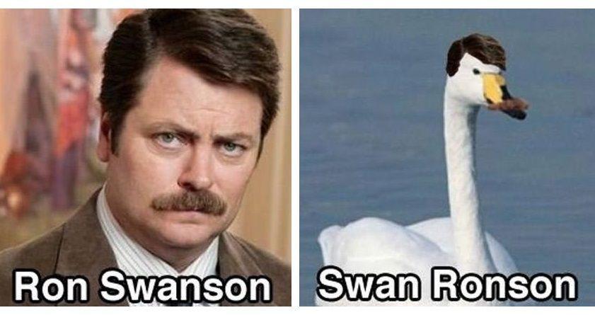 Swan Ronson