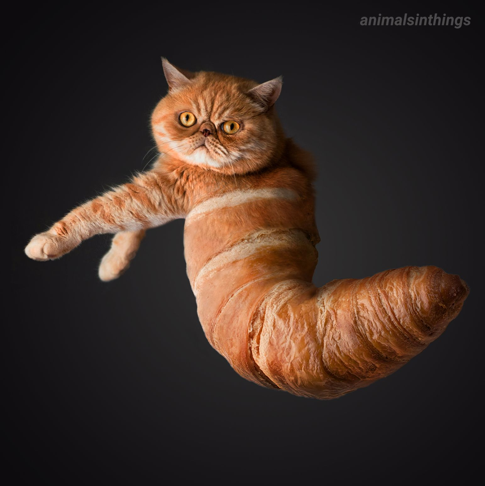 I photoshopped a cat into a croissant for you.