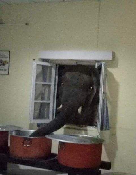 Elephanto touching ma spaghet
