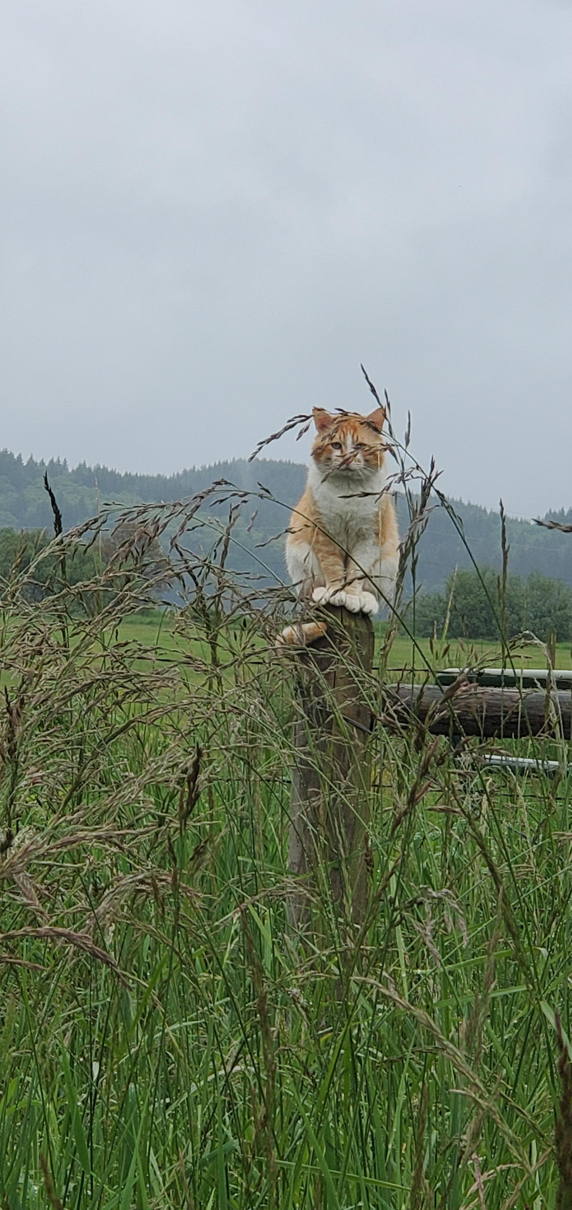 A feral/farm cat I see on my walks. I named him Post Malone.