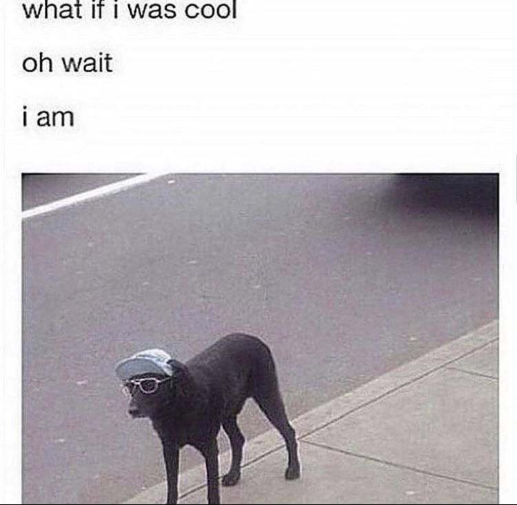 Doggo is the coolest