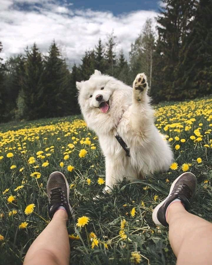 Hi everyone how you doing?