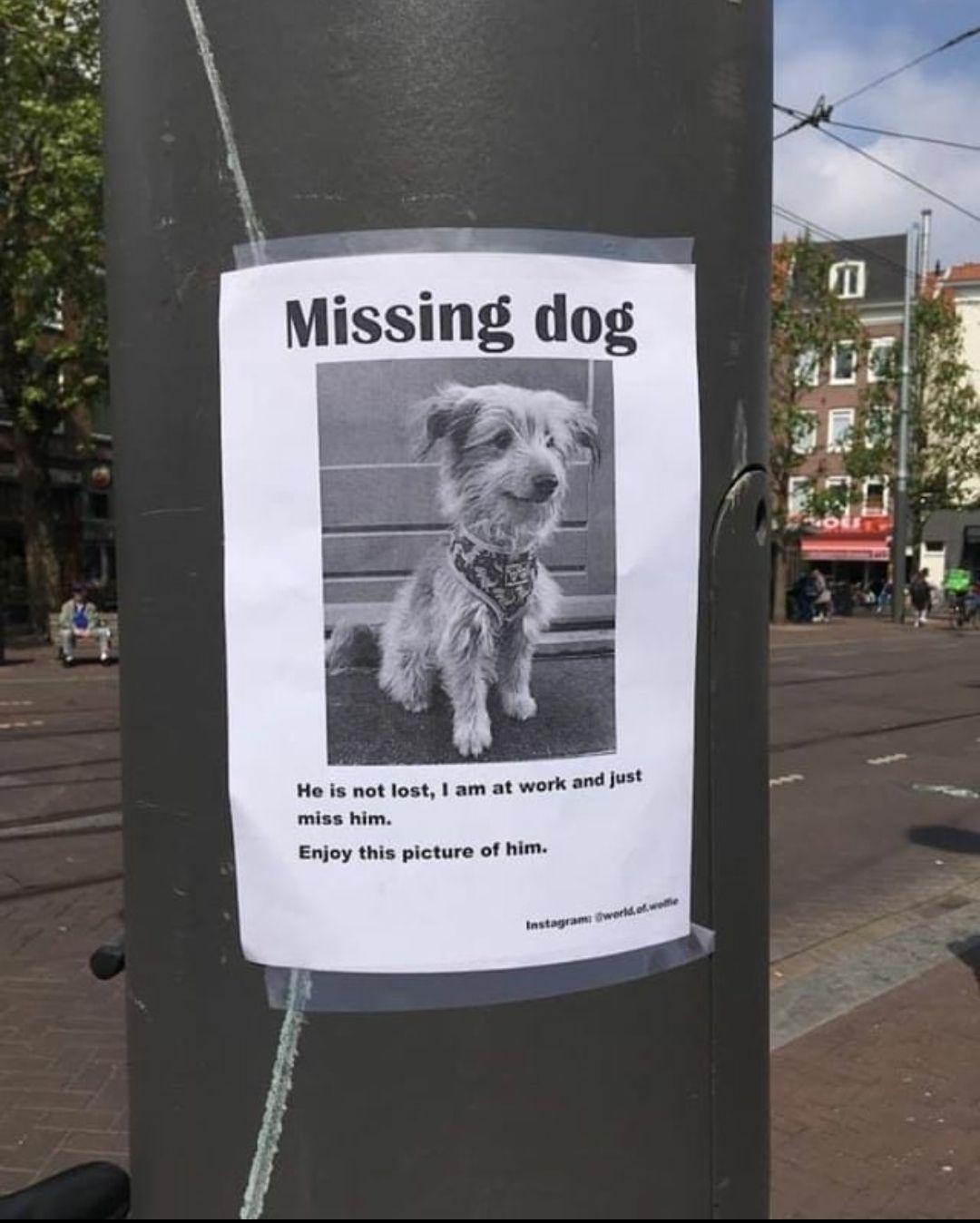 Missing dog everyday