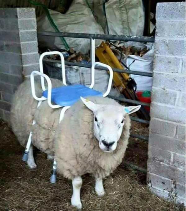Ride on lawn mower, $300 barely used, good condition