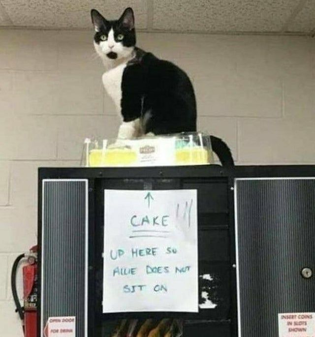 Infamous cat