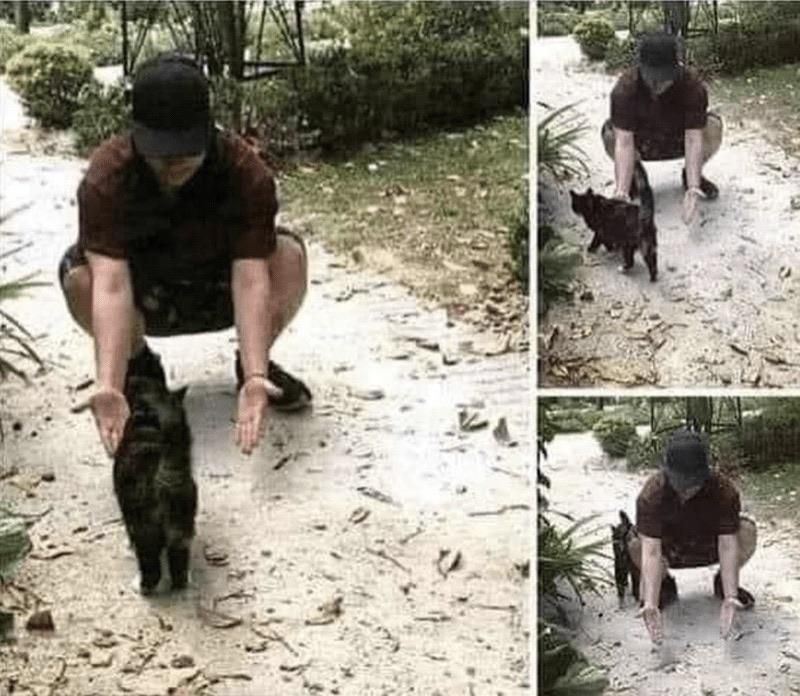 The emotional reaction of a cat after seeing its owner for the first time in 6 months