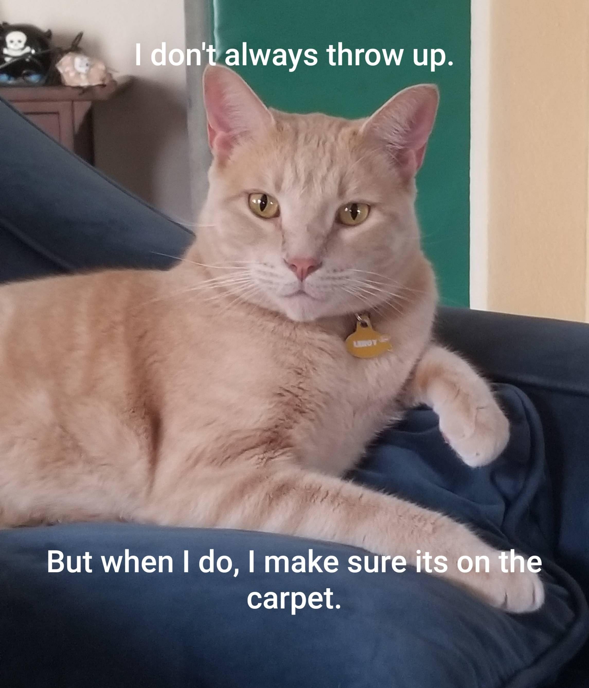 Leroy, the most interesting cat in the world.