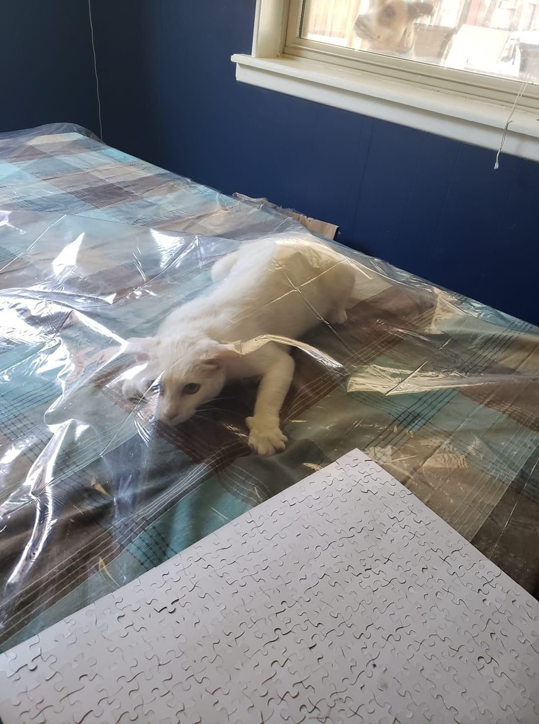 My friend put a plastic tablecloth down so the cats wouldn't think it's a blanket on the table just for them