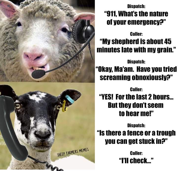 Sheep call centre