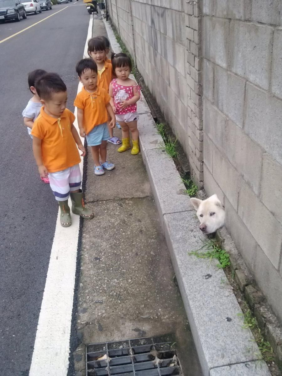 Hey Little humans, the lockdown is over?