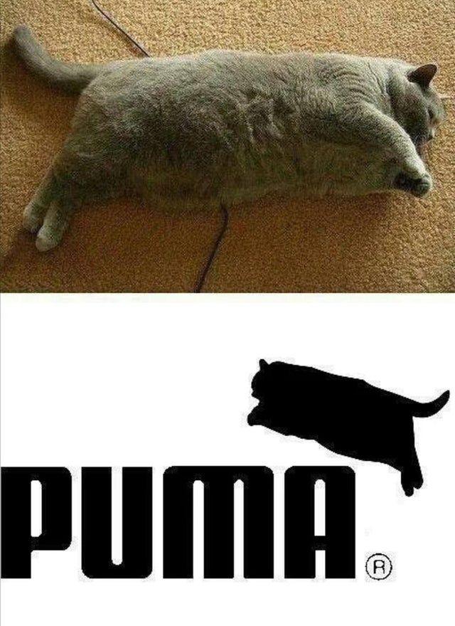 new puma logo!