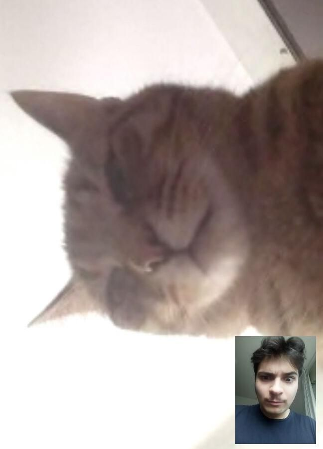 Skype called my father during quarantine, this is what I saw when he picked up.
