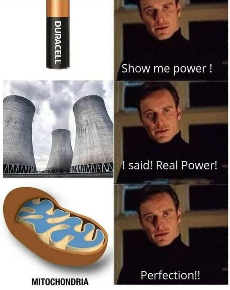 the mitochondria is the powerhouse of the breh