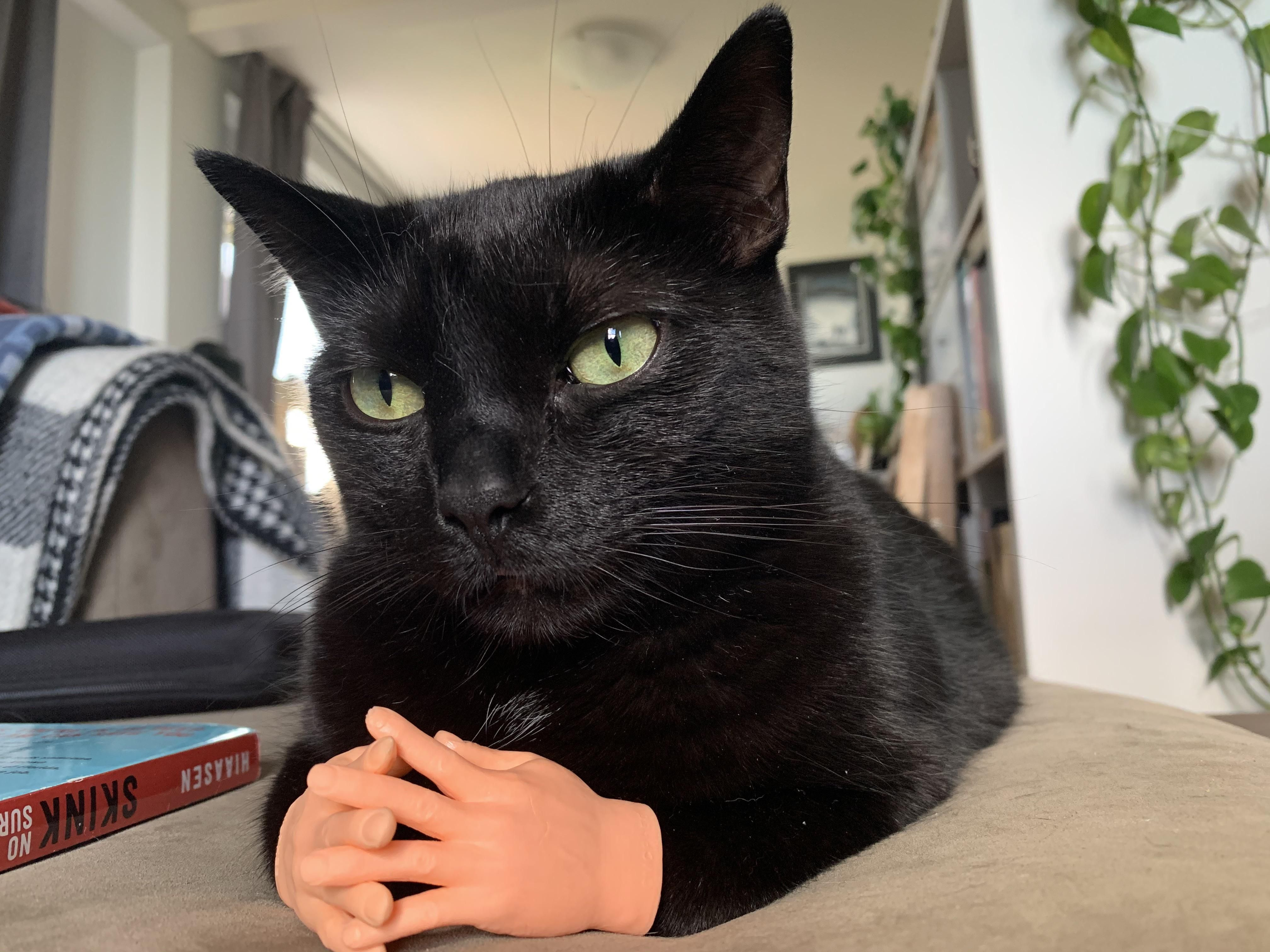 Cat + tiny rubber hands = Judgmental cat who demands an explanation.