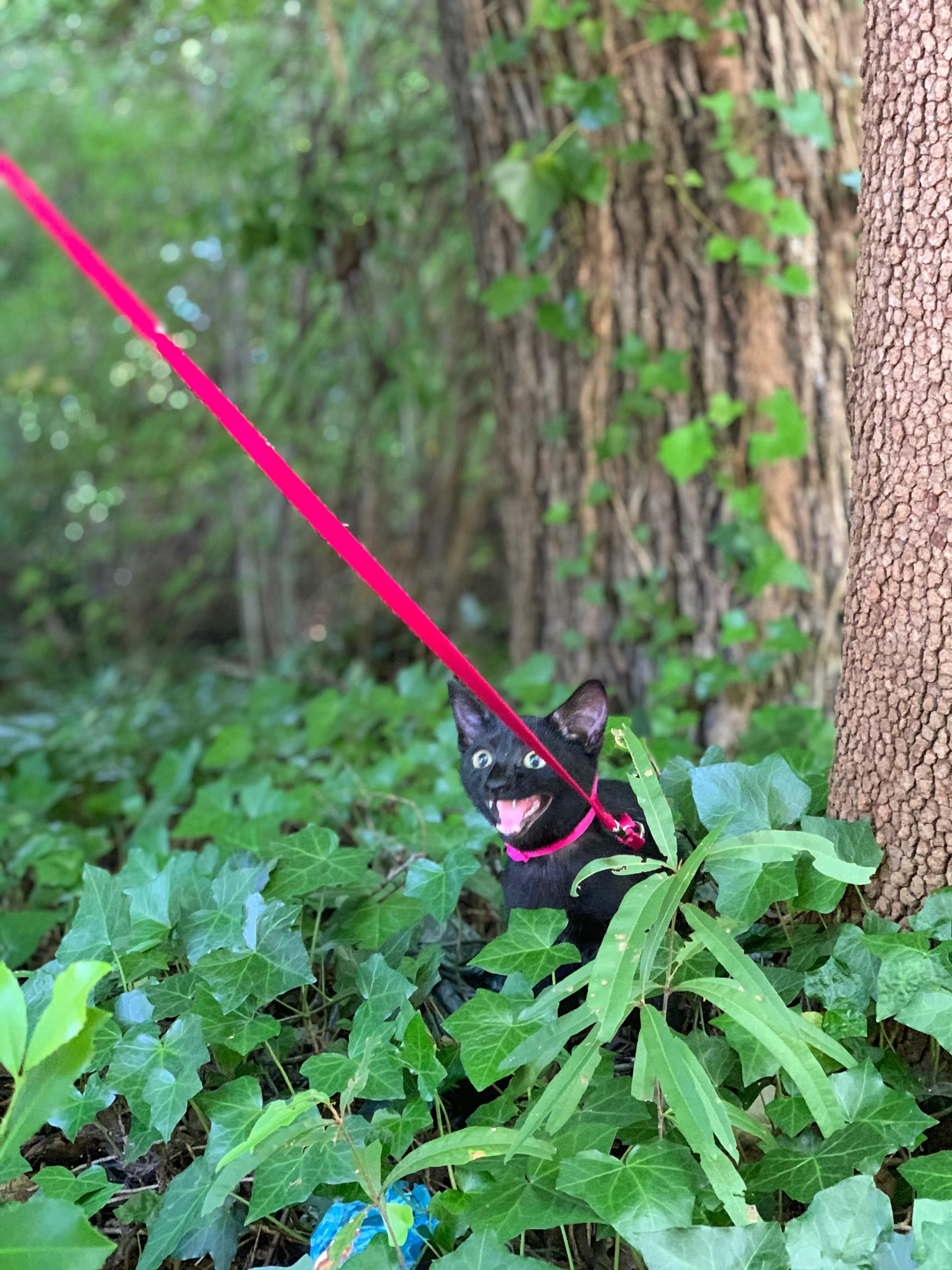 took my kitten out on her first walk..